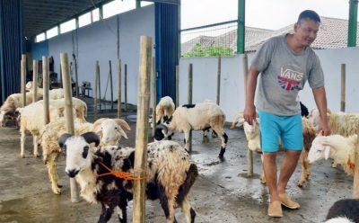 Penjual Hewan Kurban Mulai Marak Buka Lapak di Pandeglang