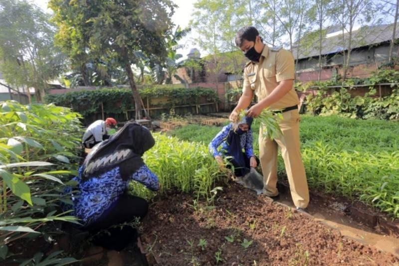 Perkuat Ketahanan Pangan: Pemkot Tangerang Terus Sosialisasikan Berkebun Kepada Warga
