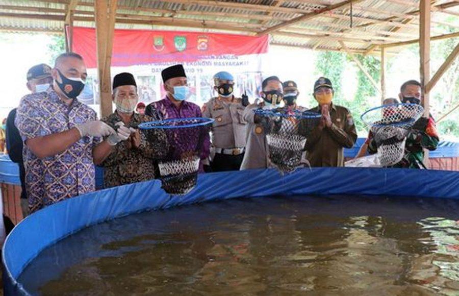 Kapolresta Tangerang Bersama Bupati Zaki Panen Raya Ketahanan Pangan Jagung Hibrida dan Ikan Lele