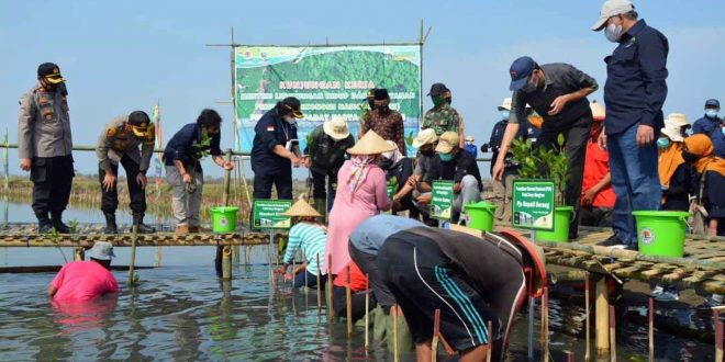 Kementrian LHK Tanam 15.000 Batang Mangrove di Desa Lontar