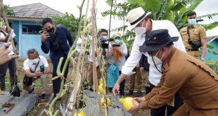 Perkuat Ketahanan Pangan, Gubernur Banten: Sektor Pertanian Menjadi Perhatian Serius