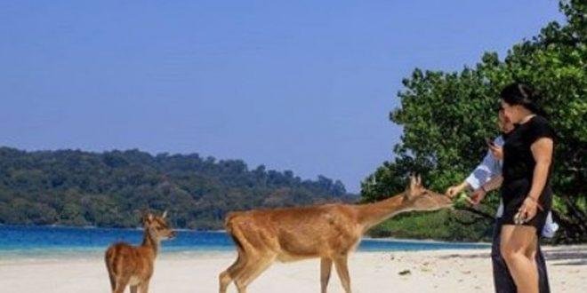 Wisatawan Taman Nasional Ujung Kulon Wajib Bawa Surat Hasil Rapid Tes
