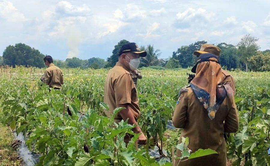 Bupati Tangerang Meninjau Kampung Hidroponik Desa Sodong Tigaraksa