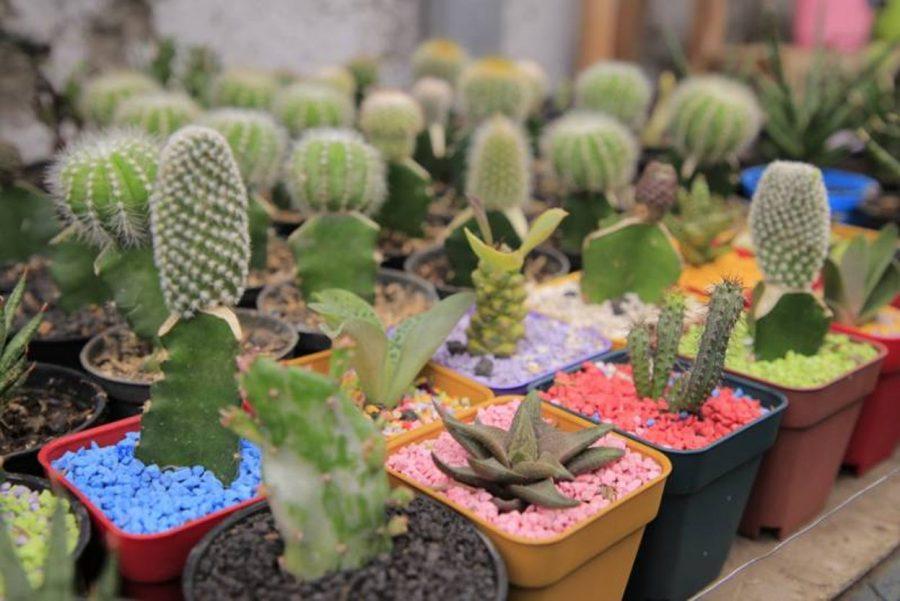 Berbisnis Terarium Kaktus Bisa Menghasilkan Pundi Rejeki yang Maksimal
