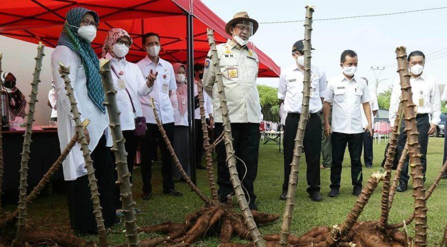 Gubernur: Singkong Bisa Menjadi Makanan Pengganti Nasi