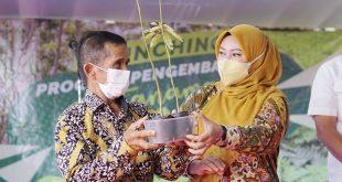 Bupati Pandeglang Gandeng Pihak Swasta Bangun Perkebunan Sengon
