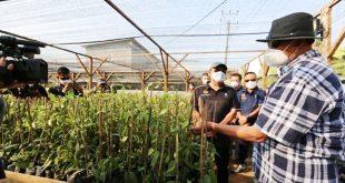 Gubernur: Budidaya Vanili Dorong Pengembangan Rempah Provinsi Banten